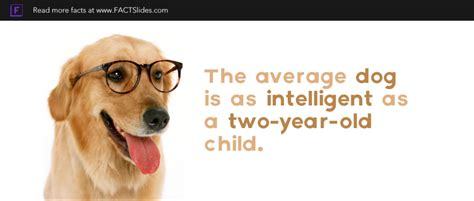 about dogs facts 74 facts about dogs factslides