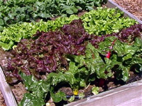 vegetable gardening in colorado planttalk colorado planning a vegetable garden