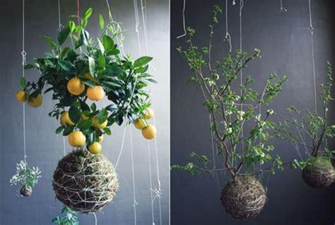 inside gardening ideas 50 gardening ideas healthy