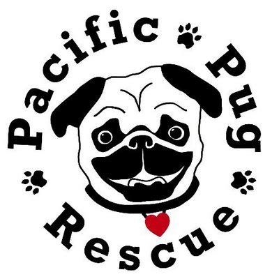 pug rescue portland oregon pacific pug rescue pacificpugs