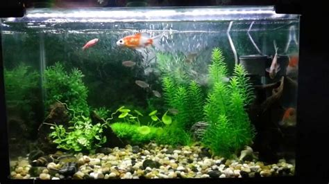 natural fish tank decoration ideas youtube aquarium decorated with natural looking artificial plants