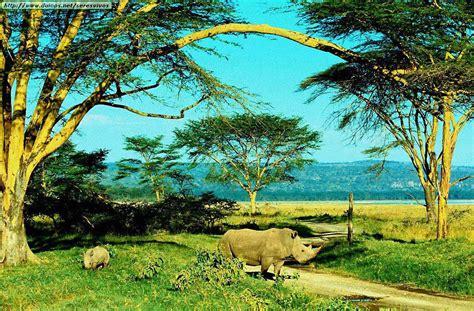 imagenes de hábitats naturales fotos de rinocerontes