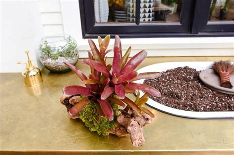 bromeliad mount care   water  care  mounted