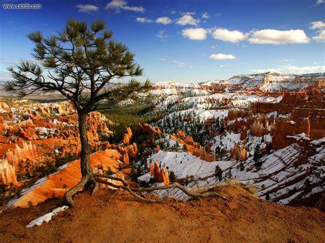 Sset Pino Maroon nature aloneonthe bryce national park utah