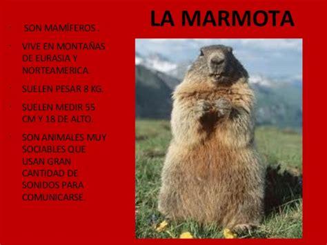 cadenas montañosas mas altas de europa animales de monta 241 a de arag 243 n
