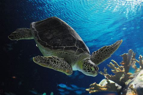 National Geographic 4 Yang Terkuat Di Darat reptiles dunia binatang