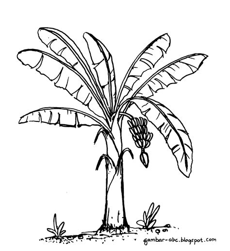 mewarnai pohon pisang contoh gambar mewarnai