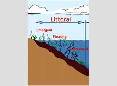 Intertidal zone clipart - Clipground Rocky Intertidal Zones