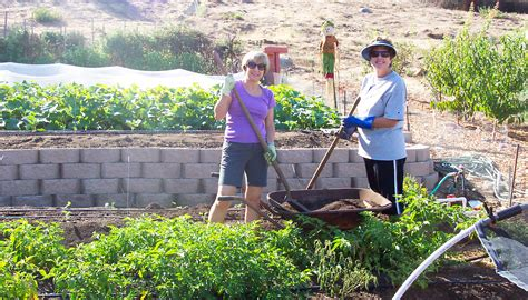 backyard produce backyard produce project reaches 100 ton mark pomerado news