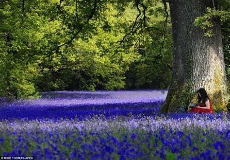 bluebell forest 20 famous bluebell woods in the world best amazing