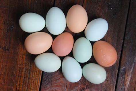 egg colors easter egger egg colors 2 mailorderpoultry