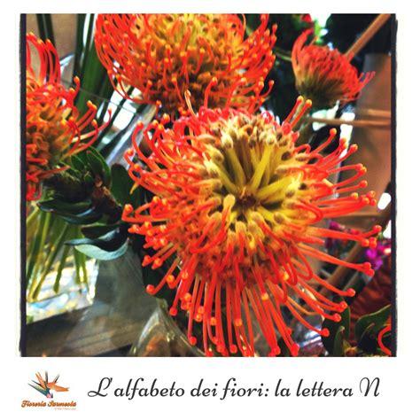 alfabeto dei fiori l alfabeto dei fiori la lettera n