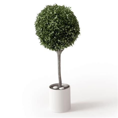 Small Flower Pot by Small Potted Round Green Leaf Tree 3d Model Cgtrader Com