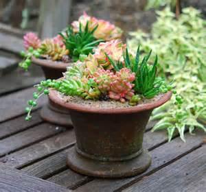 succulent pots succulents garden foreplay