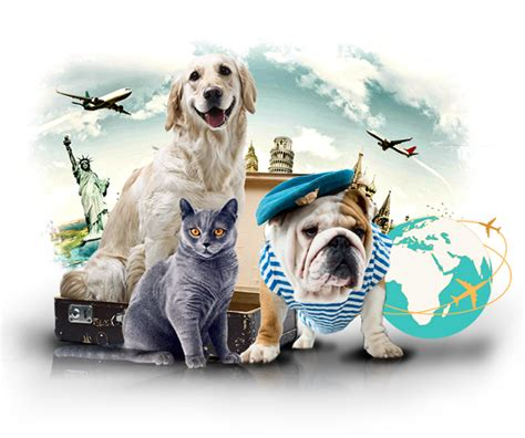 how do you ship a puppy a simple guide to overseas pet shipping simpleguideto