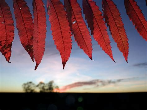 what makes leaves change color what makes leaves change color in the fall mannaismaya