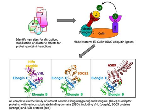 by structure guided design d ghosh et al j med chem 55 8464 2012 targeting the ubiquitin system cullin ring e3 ligases