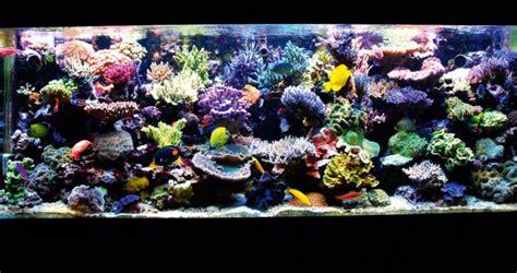 design zeeaquarium your tanks luc loyen practical fishkeeping magazine