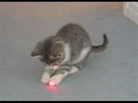 laser light cat cats chasing laser pointers