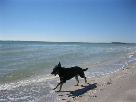beaches that allow dogs top 10 friendly beaches for 2012