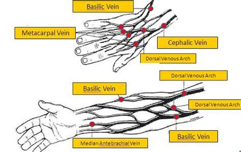 Dasar Dasar Fisiologi Ginjal keperawatan dasar 2 anatomi fisiologi ginjal