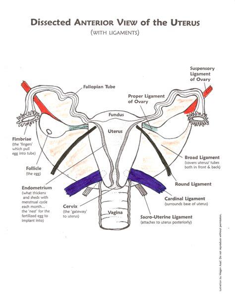 diagram of prolapsed uterus diagram prolapsed uterus choice image how to guide and