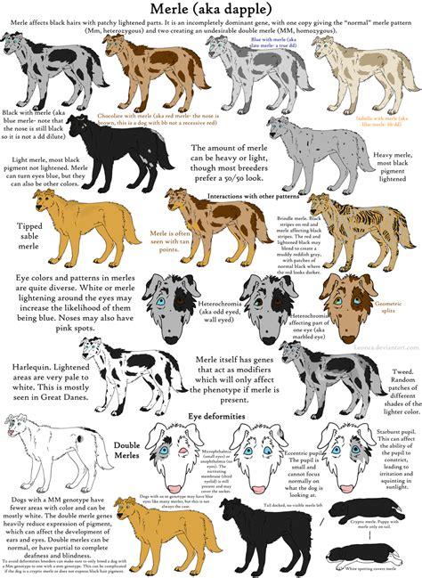 dog color pattern names dog colors guide merle by leonca on deviantart