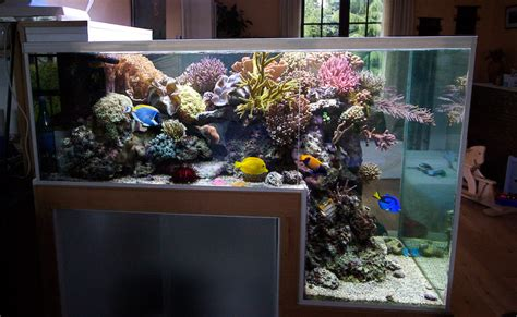 Pajangan Turtle the drop reef aquarium of philippe grosjean news reef builders the reef and marine