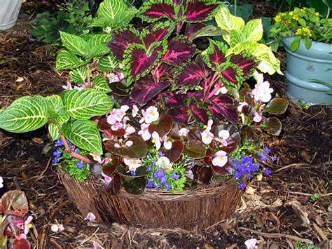 Garden In Pots Ideas Planting In Containers Container Gardening Ideas