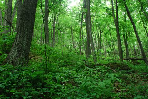 a forest design and implementation for sustaining wildlife populations in ne forests rcngrants org