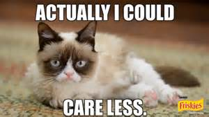 Success Cat Meme - going viral if grumpy cat can do it so can you viral