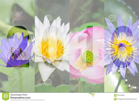 new year lotus flower happy new year 2016 in lotus flower theme stock photo