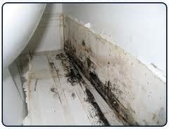 Mold In Bathroom Mold Inspection Testing