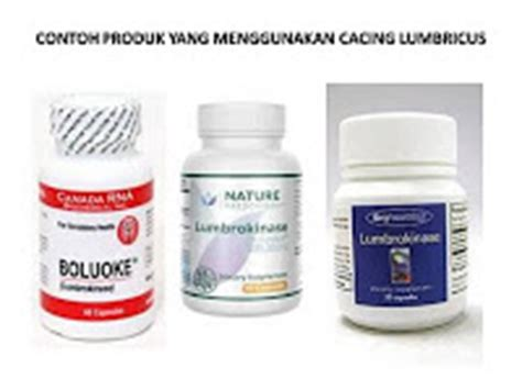 Obat Cacing Dilong indonesia lumbricus rubellus center manfaat cacing