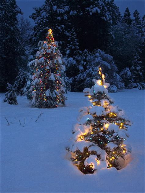 snowball lights for christmas tree tree lights in the snow flickr photo
