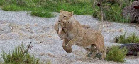 catastrophes cause big problems for wildlife dallas
