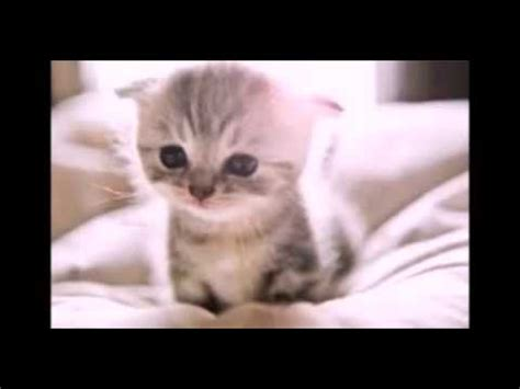 imagenes de perritos kawaii gatitos y perritos kawaii youtube