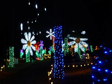 Christmas Lights In The Garden S Conifer Forest Picture Lights Oregon