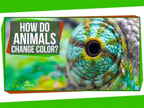 animals that change color how do animals change color