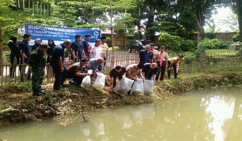 Bibit Ikan Arwana Di Medan asuransi astra tebar bibit ikan nila di kolam taman cadika