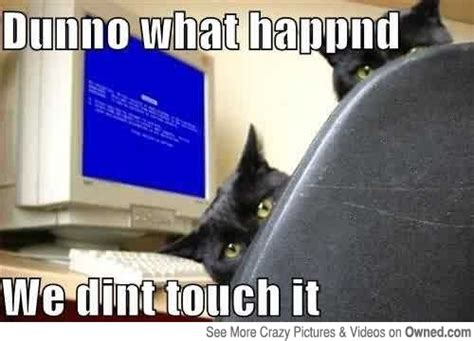 Cat Laptop Meme - computer cat meme google search computer cats