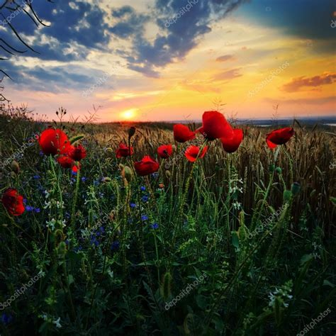 immagini paesaggi fioriti paesaggio con prati fioriti in estate dobrogea romania