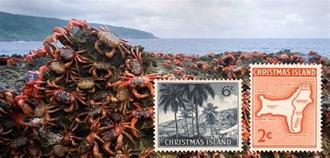 the 12 days of christmas island hakai magazine