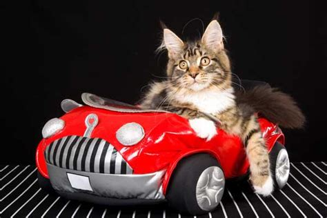 Kat Auto by Vehicle Donation For The Love Of Cats