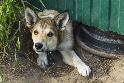 how to fearful dogs how to approach a fearful growling animals me