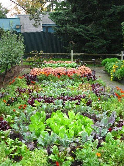 backyard organics 205 best images about vegetable gardening ideas organic