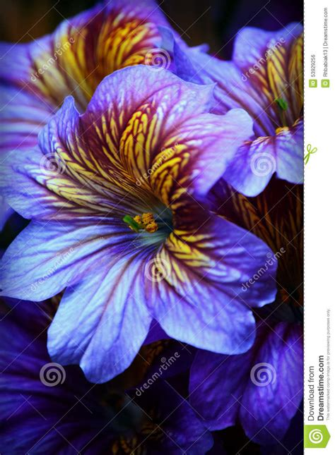 tropical plants chicago purple yellow tropical flowers stock photo image 53929256