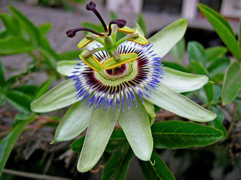 imagenes gratis flores exoticas flores ex 211 ticas paisagismo legal