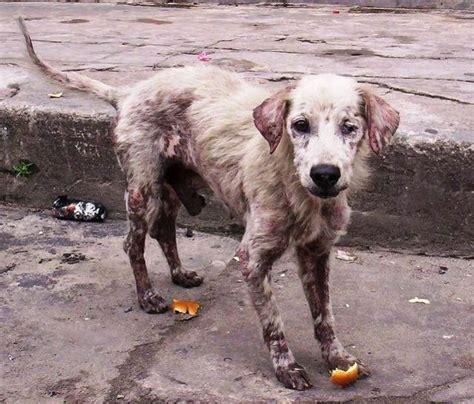 imagenes de animales maltratados frenar el maltrato al perro formas de hacerlo eroski