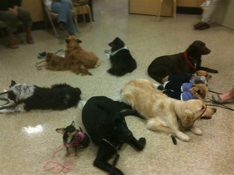 free puppy classes at petsmart image gallery petsmart dogs